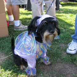 2005-Bow-wow-ween-14