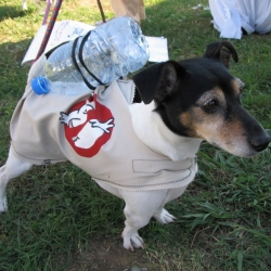 2005-Bow-wow-ween-4
