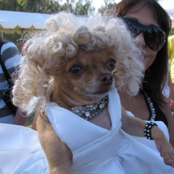2006-Bow-wow-ween-6
