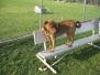 Barrington Dog Park main