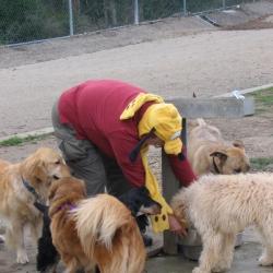 Dog-Park-1