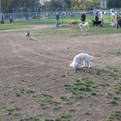 Dog-Park-11