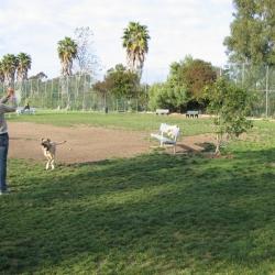 Dog-Park-14