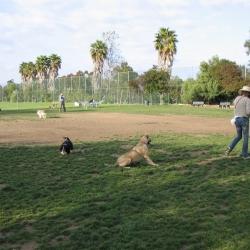 Dog-Park-15