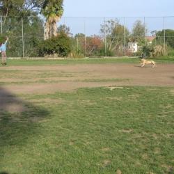 Dog-Park-17