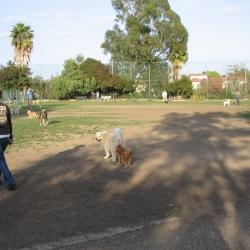 Dog-Park-19