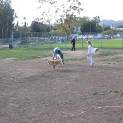Dog-Park-6