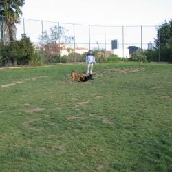 Dog-Park-9