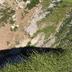 Wayne Fishback Browns Canyon May 20 2017 13
