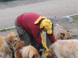 Barrington Dog Park