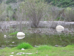 Runkle Canyon vernal pools