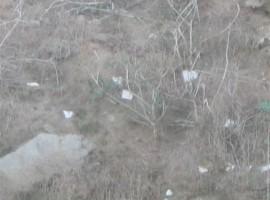 Atomic Tombstones – December 11, 2008