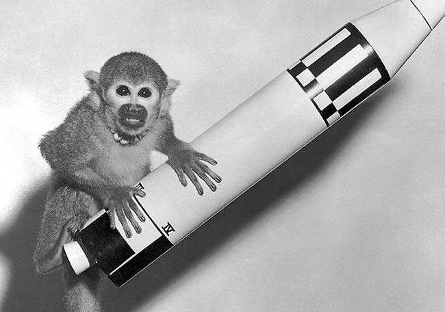 NASA's Monkey Business