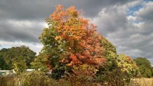 Michigan Fall 2015