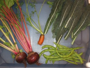 Santa Monica homegrown veggies read rad-free