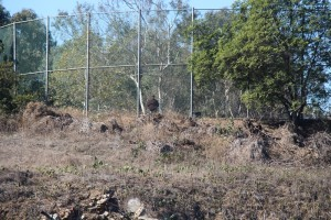 Man in Barrington Rec Center dog park gazing into West LA's nuclear and chemical dump